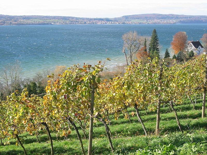 Weinbau am Bodensee (c) Praefcke / Wikipedia